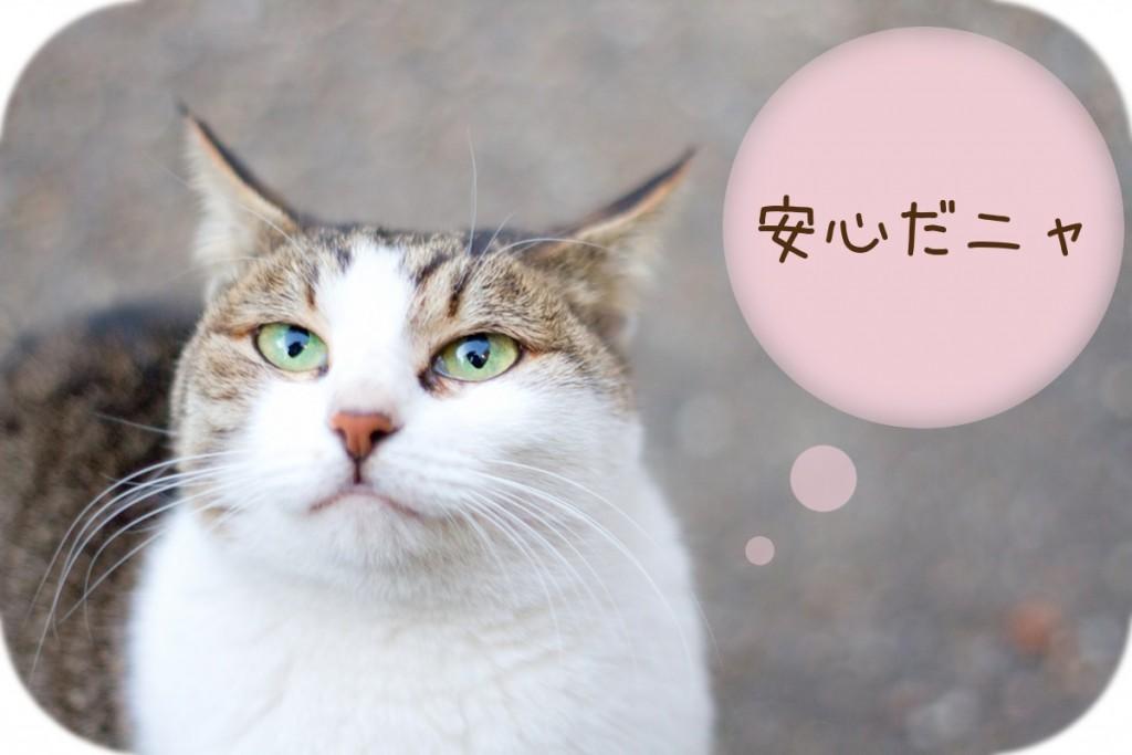 N879_kuchigahenojinoneko