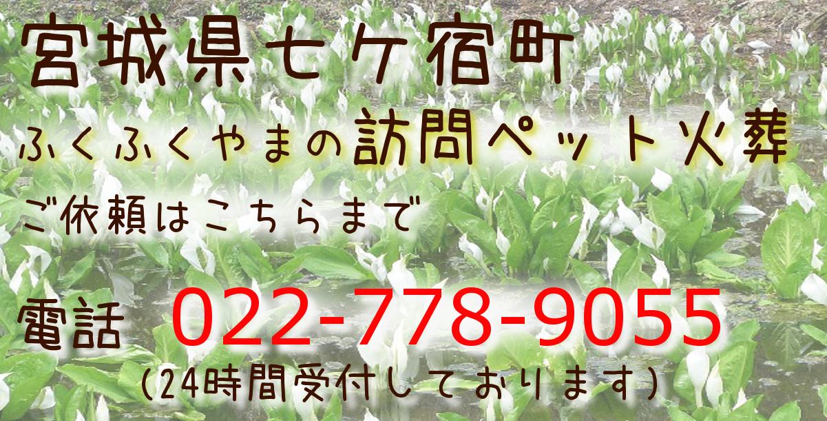 ペット葬儀 ペット火葬 七ケ宿町