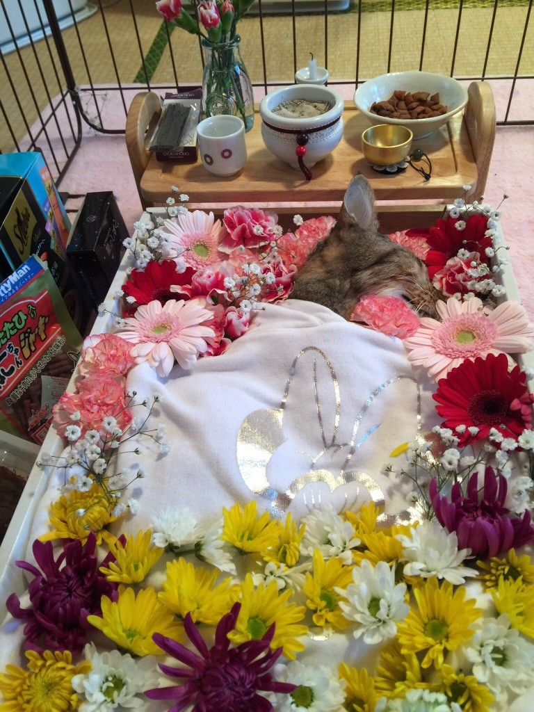 猫 葬儀 ペット火葬 お通夜