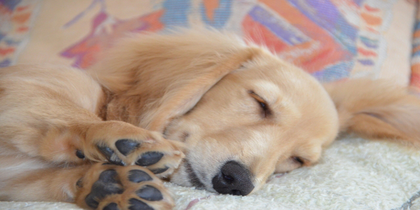 愛犬の最期