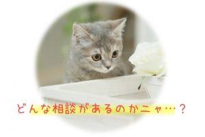 ペット葬儀 ペット火葬 相談