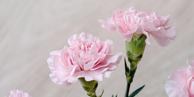 多賀城市 ハムスター 訪問ペット火葬