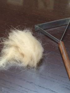 犬の毛 トリミング