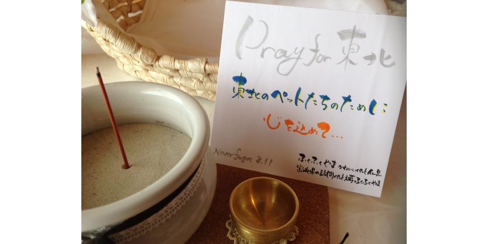 東日本大震災 ペット 宮城