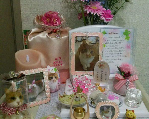 マンチカン ココちゃん 祭壇1