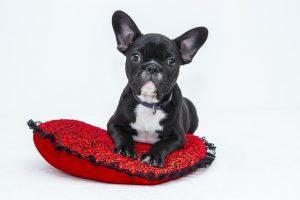 小型犬の火葬にかかる時間
