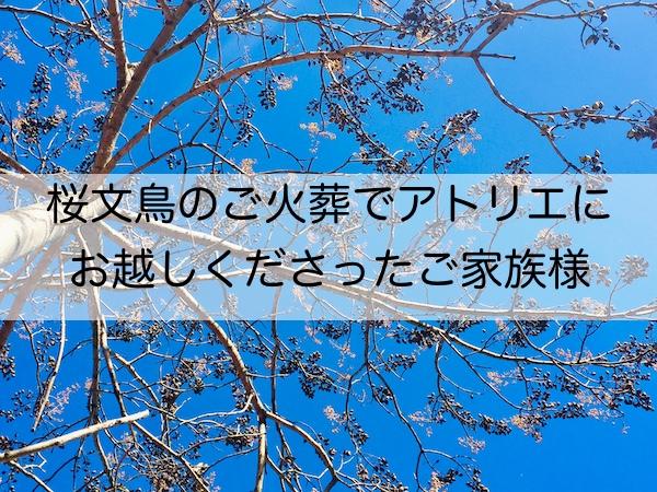 桜文鳥 火葬